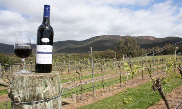 Quand le marketing digital redynamise le secteur du vin et du tourisme